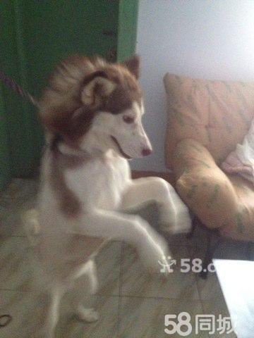 动物 狗 狗狗 360