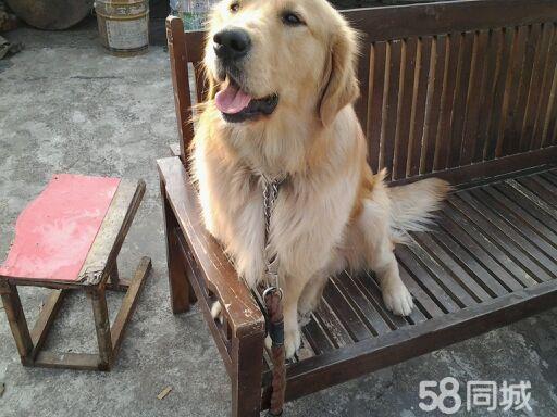 可爱小狗狗找新家