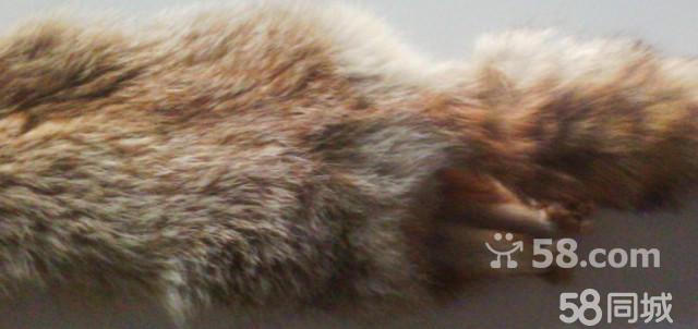 全新狐狸皮毛