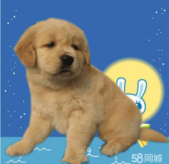 十大名狗名称,世界名狗大全,名狗大全_点力图库