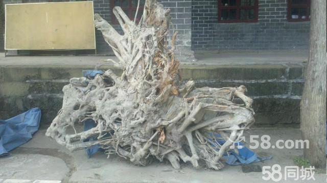 根雕--百年老树根