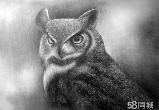 【图】写实动物素描