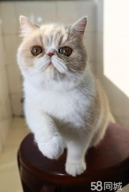 可爱小猫白底花块图片
