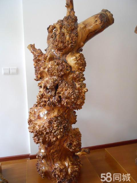 杨树树根适合做根雕