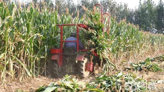 玉米收割机秸秆打包 最先进玉米收割机 收获玉米收割机