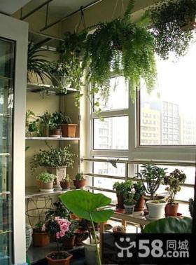 小户型阳台花架装修