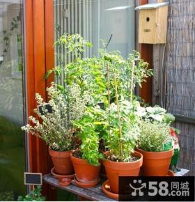 室外阳台花盆图片