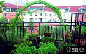 阳台菜园实景图