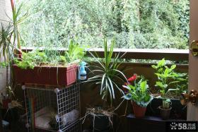 小阳台菜园图片欣赏