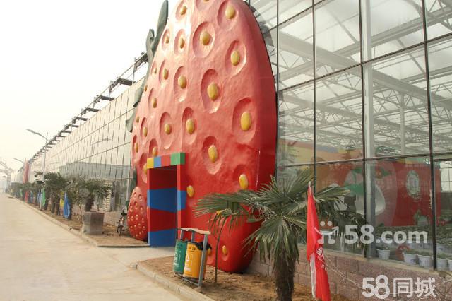 国际庄园 草莓采摘 快来采摘吧 - 郑州58同-弘亿国际庄园 郑州弘亿国