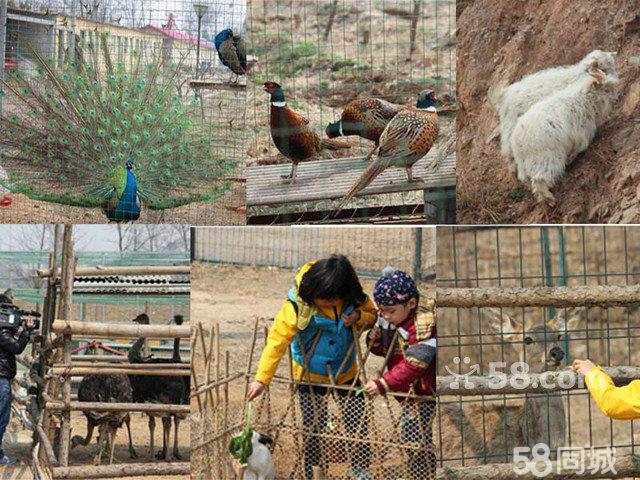 属于孩子的美好一天六一来啦,回归童真,快乐无极限。孩子们快来沃联福农园走红地毯,登上属于他们的舞台唱歌、跳舞、做游戏。 活动日期 6月1日、2日 活动时间 9:0016:00  活动地点 北京房山区韩村河镇龙门口村龙门口水库西岸尚大沃联福农园 报名人群 0-12岁的家庭(2大1小) 驾车路线 京港澳高速从琉璃河出口行驶260米,由琉璃河环岛进入琉璃河路行驶2.