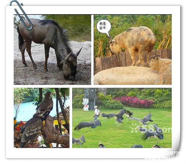 香江野生动物园1日之旅
