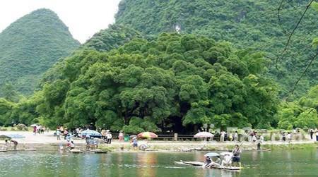 10:30参观 大榕树景区 (门票已含,游览时间约50分钟),景区中心,有一
