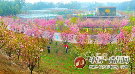 重庆南川大观园(金佛山大观生态园)婷婷农家乐