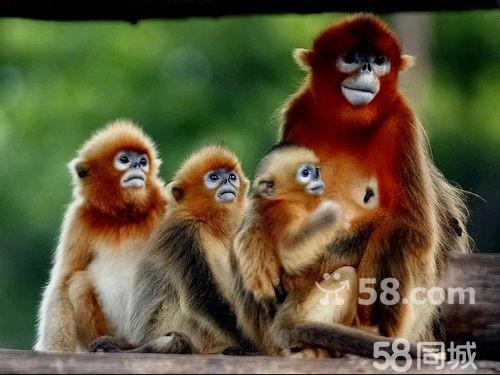 国庆休闲自驾: 威海西霞口动物园海驴岛风光之旅